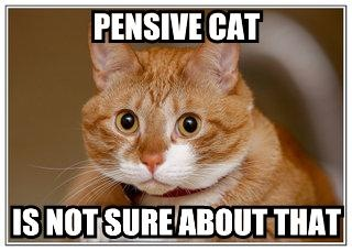 "LOLcat: ""Pensive cat is not sure about that"""