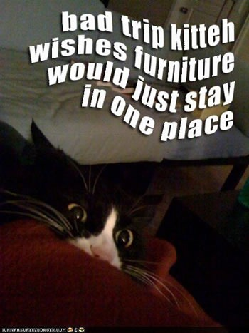 "Wide-eyed LOLcat hiding: ""Bad trip kitteh wishes furniture would just stay in one place."""
