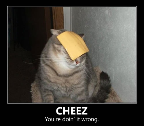 "Cat with cheese slice on its face: ""Cheez: You're doin' it wrong"""