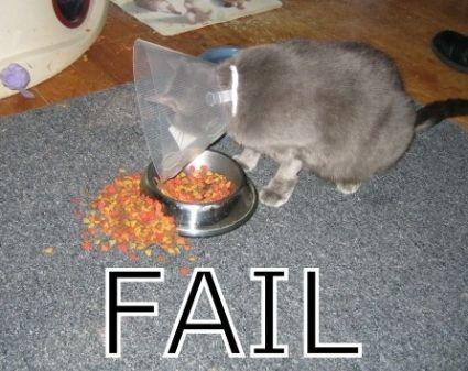 failcat