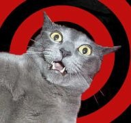 Cat with shocked, mouth-agape expression
