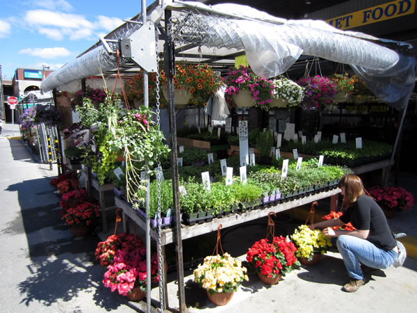 ByWard Market stall selling flowers and herbs