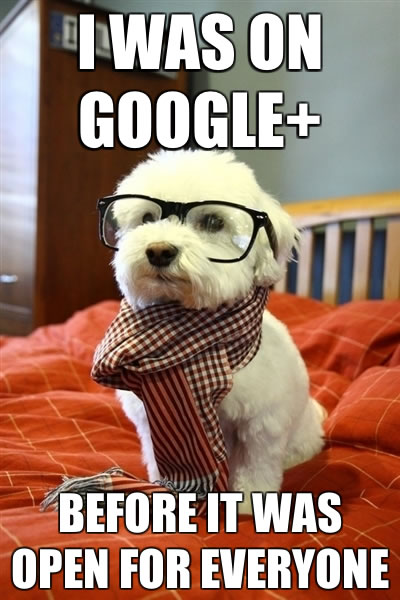 Dog in glasses and scarf: 'I was on Google+ before it was open for everyone'.