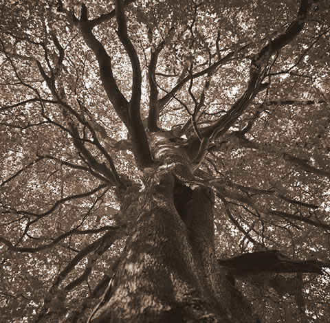 Trunk and branches