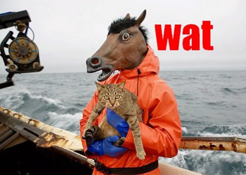 WAT: A donkey in an orange raincoat, standing on the deck of ship holding a tabby cat