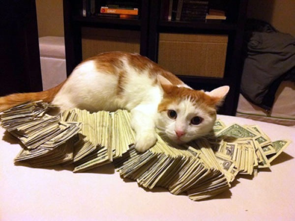 Cat sitting on a pile of money