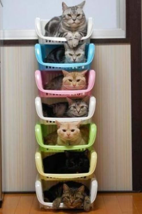 seven layer cats