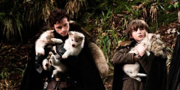 stark direwolves