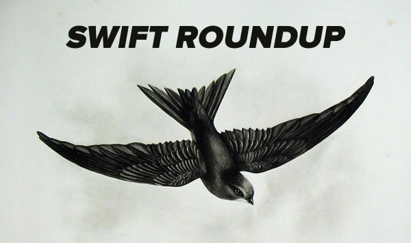 swift roundup