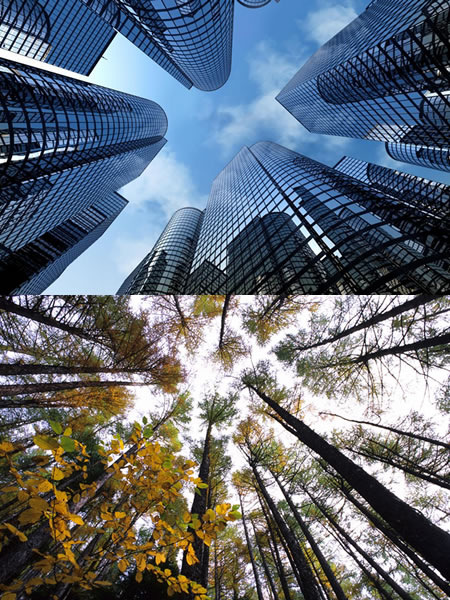 skyscrapers and trees from the ground